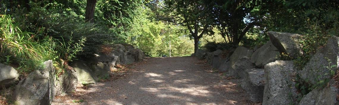 Photograph of a walking path through a park