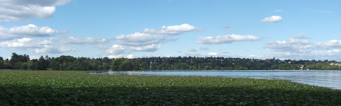 Photograph of lily pads and kayakers on a lake on a sunny day